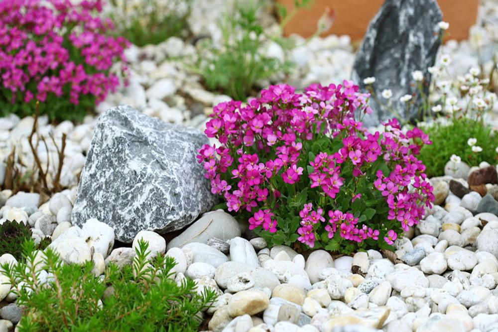 ideas para rocallas en el jardín